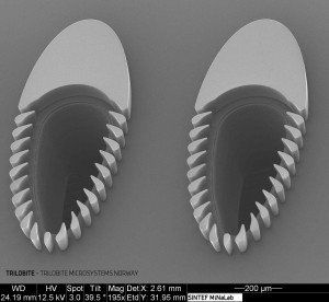 SEM micrograph of two counter-flow cells. Separation of particles occurs as their dimensions exceed the minimum distance between the adjacent micro-pillars.